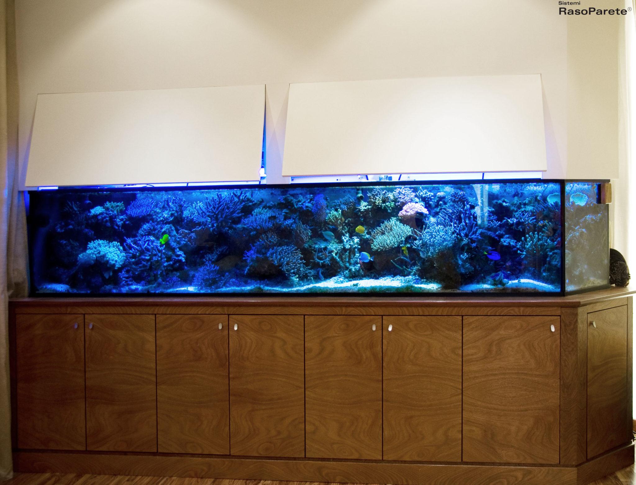 rasoparete acquario