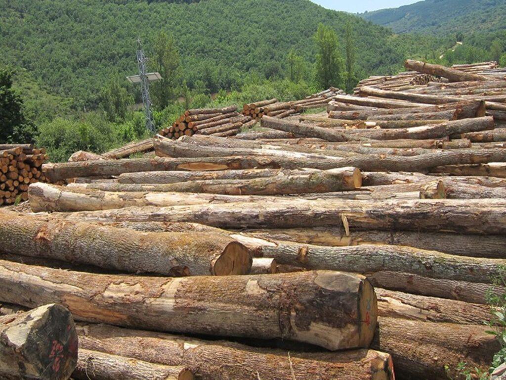 tronchi legno Solquer